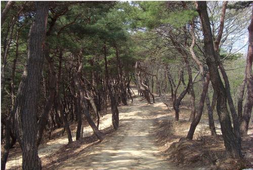 Solmarugil Road (솔마루길)