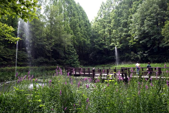 여러 종류의 수생식물을 관찰할 수 있는 생태연못