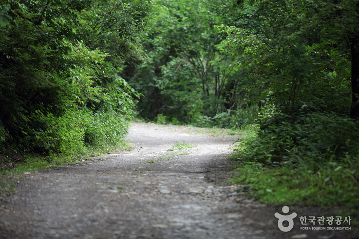 강원랜드 산책로