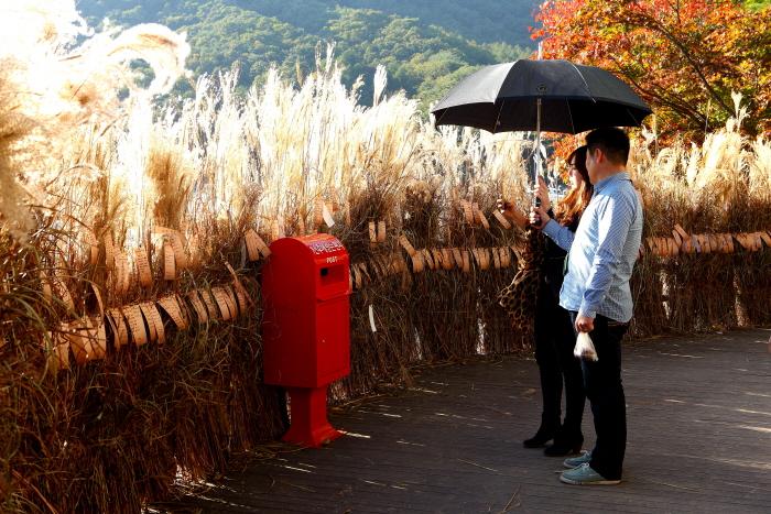가을꽃의 아름다움을 만끽할 수 있는 축제