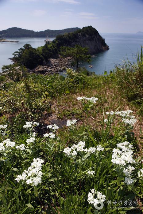 수평선과 꽃을 함께 감상하는 시간