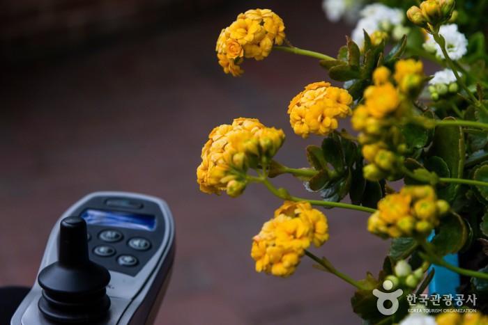 관람로 가까이에서 꽃이 피는 안산식물원