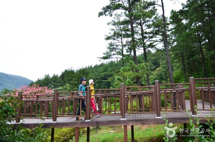 나무데크가 설치된 대가야 탐방숲길 진입로
