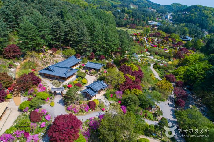 Сад утреннего спокойствия (아침고요수목원)2