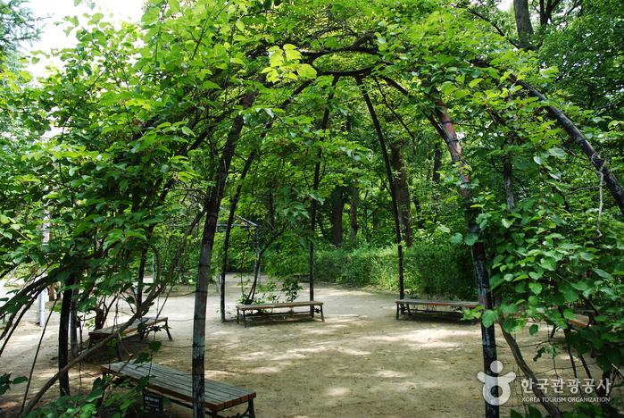Korea National Arboretum and Forest Museum (Former Gwangneung Arboretum) (국립수목원-구, 광릉수목원)