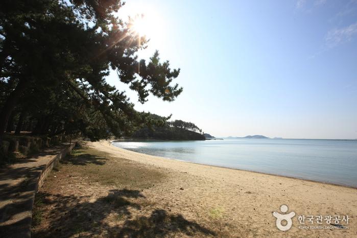 Пляж Сонхо (송호해수욕장)3
