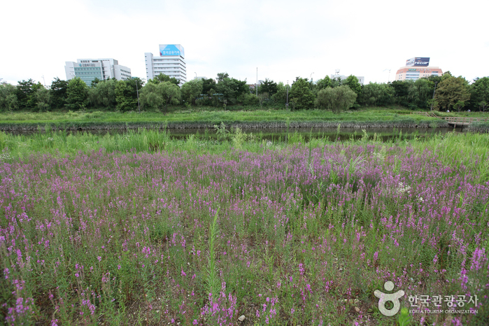 Yeouido Saetgang Ecological Park (여의도샛강생태공원)