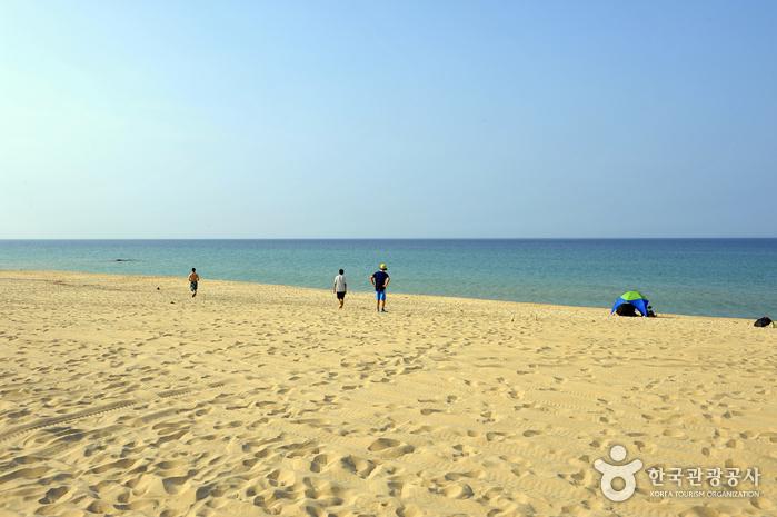 注文津海岸(주문진해변)