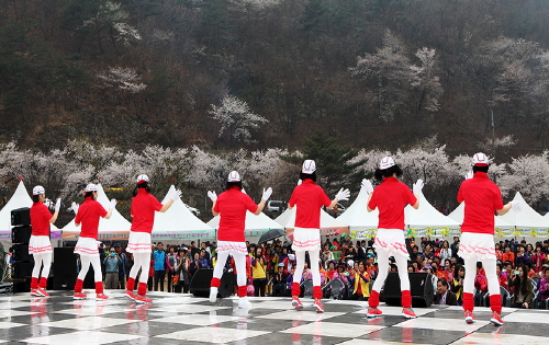 Silk Town Mountain Cherry Blossom Festival (비단고을 산꽃축제)
