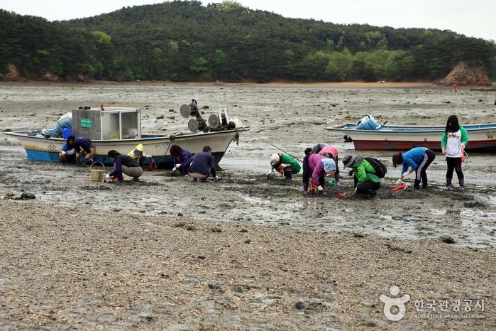 바지락 캐고 감태초콜릿 만들고 도자기 굽고! 서산 중리어촌체험마을에서 쓰는 '바닷마을 다이어리' 사진