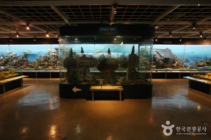Busan Marine Natural History Museum (부산해양자연사박물관)