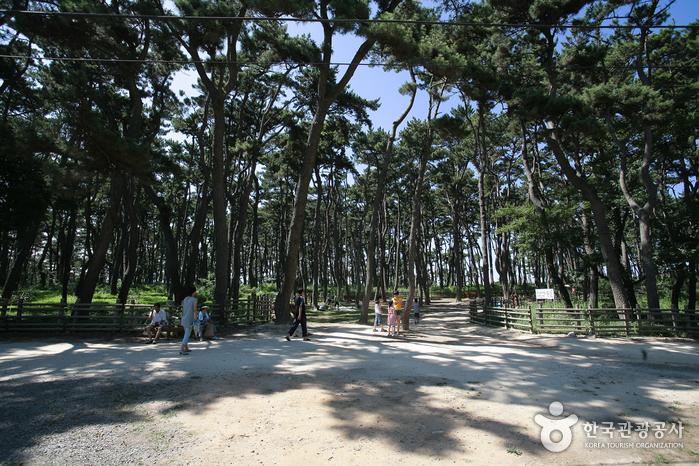 Парк Тэванам (대왕암공원)48