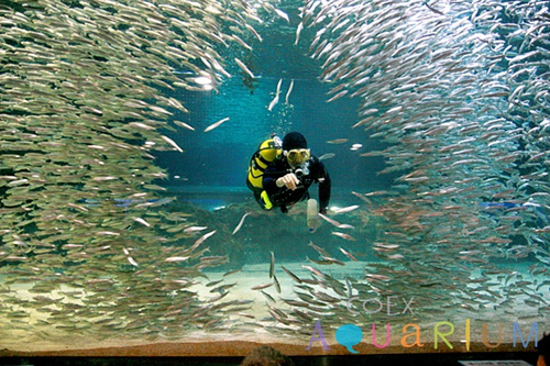 COEX Aquarium (코엑스 아쿠아리움)