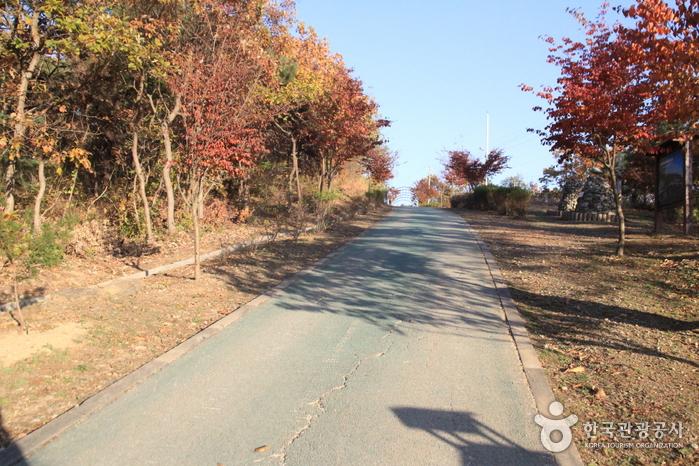 [Ruta 6 del Sendero Nadeul-gil de Ganghwa] Camino a la Casa Natal de Hwanam ([강화 나들길 제6코스] 화남생가 가는 길)