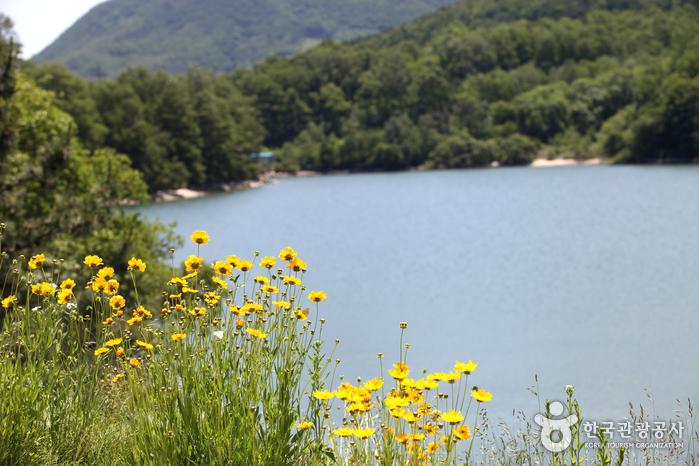 강진저수지에 피어난 들꽃