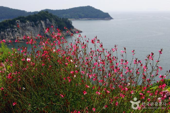 형형색색의 꽃들이 피고 지는 애도