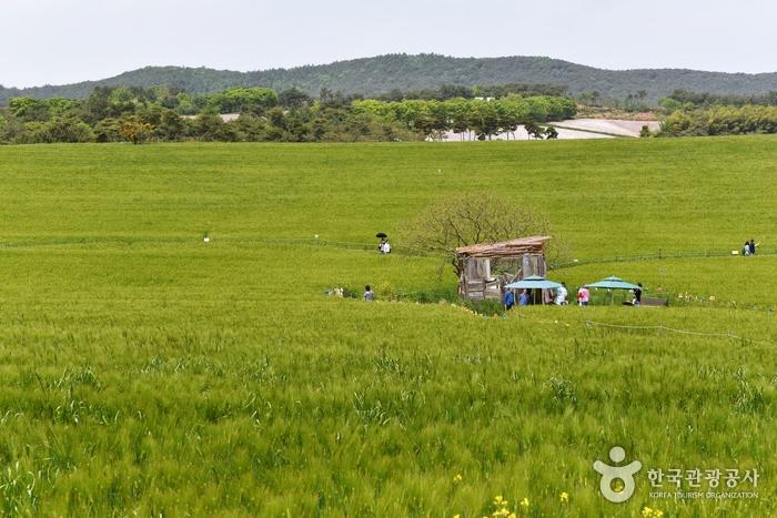 麦の国鶴園農場(보리나라 학원농장)