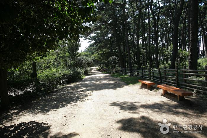 Парк Тэванам (대왕암공원)47