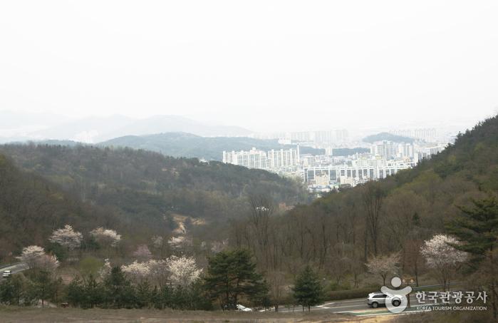 벚꽃 드라이브길과 시내 전경