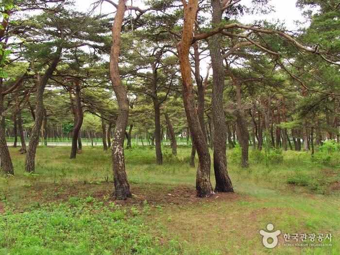 洛山道立公園(낙산도립공원)