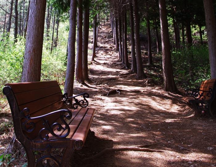 연둣빛 신록으로 빛나는 숲