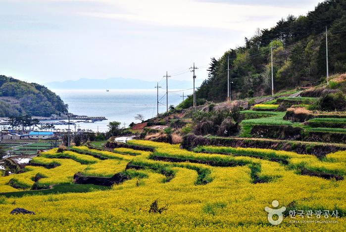 남해군 야생화 관광단지
