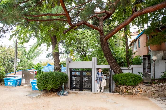심우장의 90년생 소나무