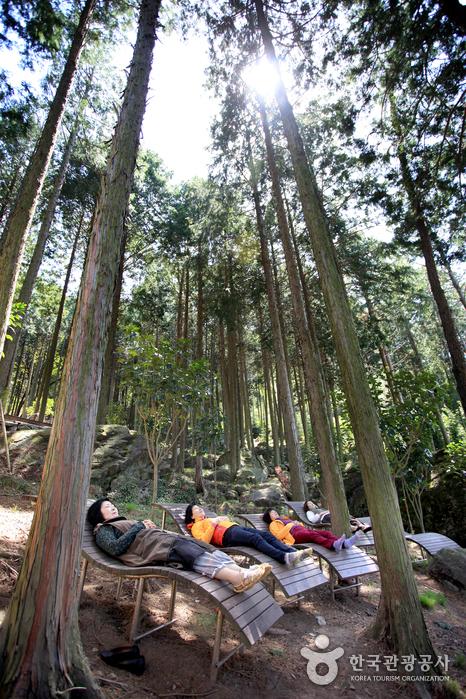 ヒノキの森ウッドランド(편백숲 우드랜드)