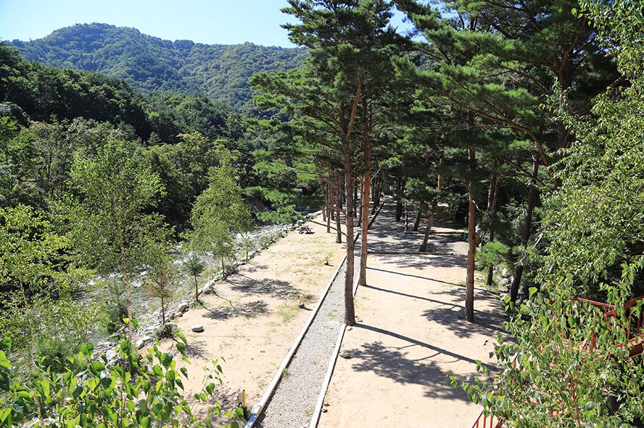 샘골솔밭야영장