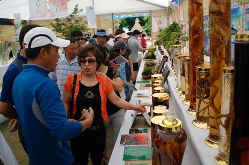 Hamyang Wild Ginseng Festival (함양 산삼축제)