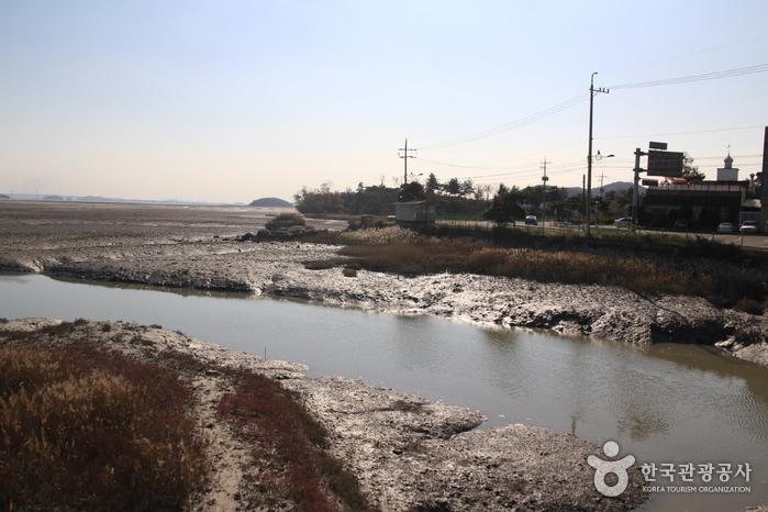 [Ganghwa Nadeul-gil Course 8] Bird Watching Trail ([강화 나들길 제8코스] 철새 보러 가는 길)