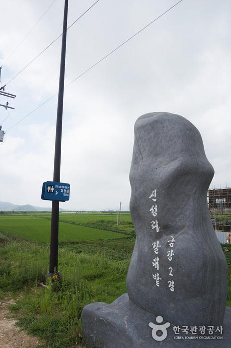 新城里芦苇田(신성리 갈대밭)