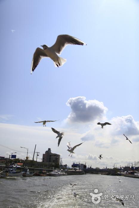 갈매기 날아다니는 포항의 자연스러운 물길