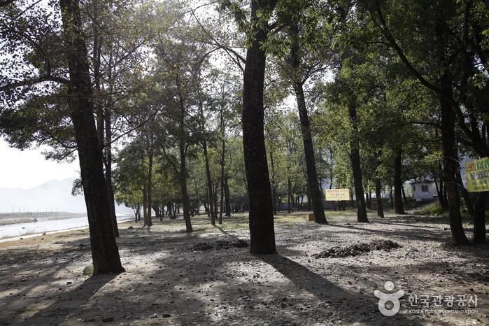 고령 신촌숲