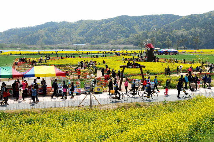 Changnyeong Nakdonggang Youchae Festival (창녕 낙동강유채축제)
