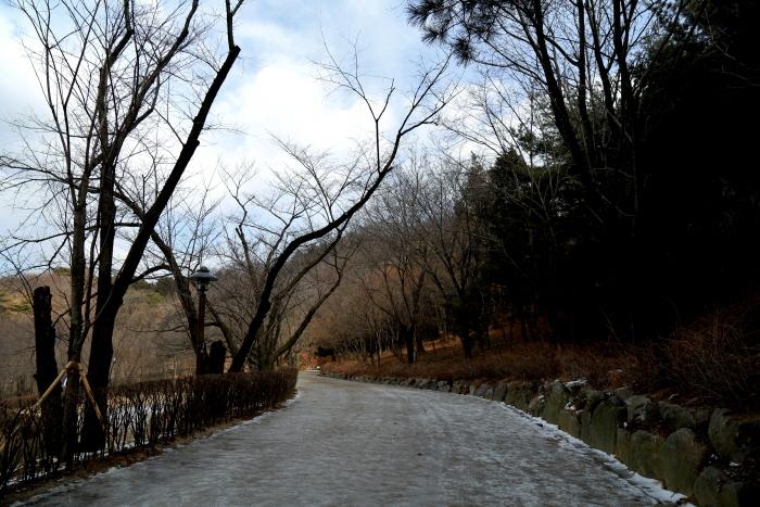 안산자락길에서 봄을 기다리는 겨울나무
