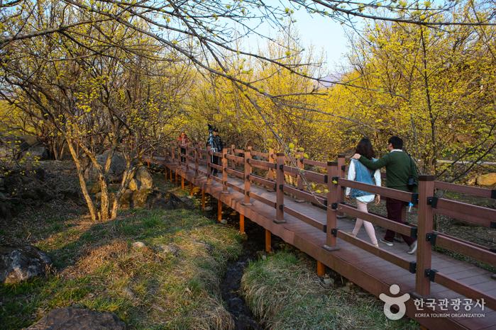 求礼 山茱萸村(구례 산수유마을)