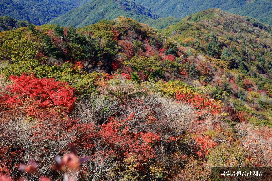 Jirisan National Park (Hadong Section) (지리산국립공원(하동))