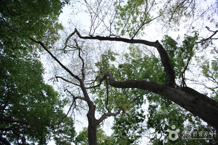 Mulgeon Windbreak Forest (남해 물건리 방조어부림)