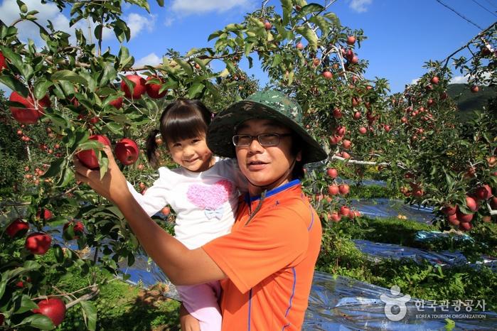 아이에게 사과 따는 요령을 알려주는 농장주