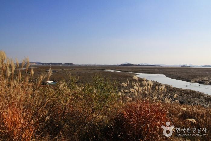 [Ganghwa-Wanderweg Route 8] Der Weg zu den Zugvögeln ([강화 나들길 제8코스] 철새 보러 가는 길)