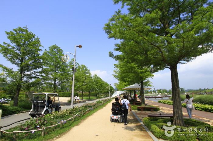 네덜란드 정원과 이탈리아 정원 사이의 메타세쿼이아길- 메타세쿼이아 나무가 양쪽 길에 일렬로 심어져 있다. 한쪽엔 잘 관리된 화단이 있고 사람들은 그늘 나무 그늘 밑으로 길을 가고 있다.