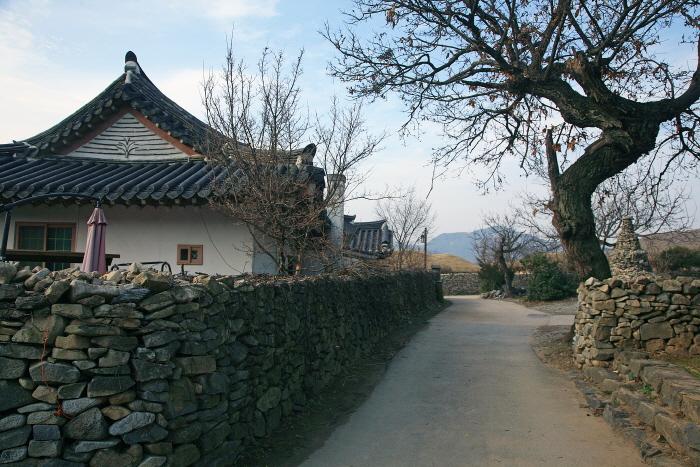 외암마을의 돌담과 고택, 고목