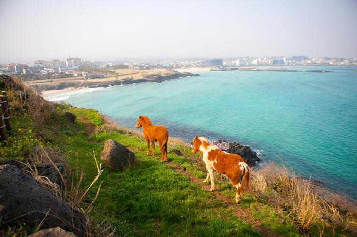 Пляж Хамдок (함덕 서우봉 해변 (함덕해수욕장))