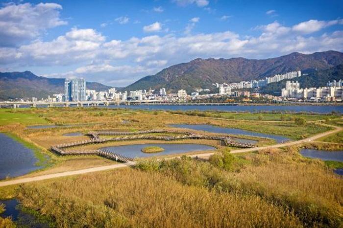 Daejeo Ecological Park (대저생태공원)