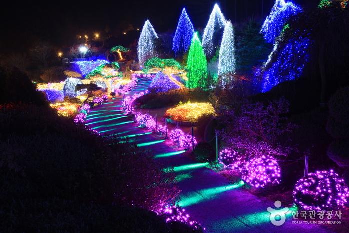 Lighting Festival (오색별빛정원전)
