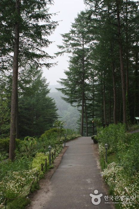 晨靜樹木園(아침고요수목원)