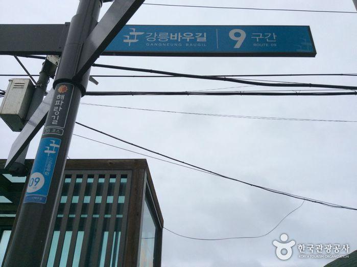 강릉바우길(9구간)
