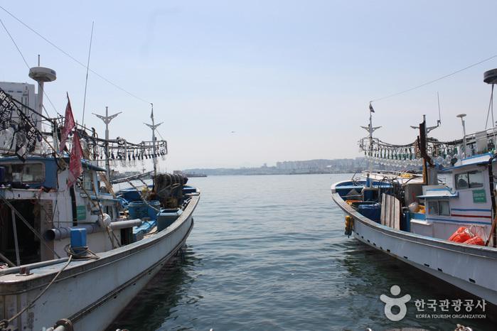 Puerto Mukho (묵호항)2