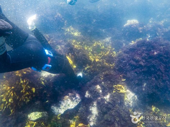 바닷속에서 해산물을 채취하려고 들어가고 있다.